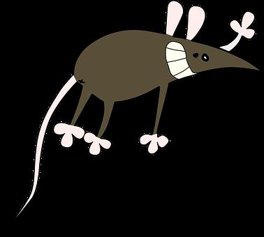 Bestrijden van ratten in Drenthe